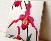 Ceramic tile, Phragmipedium Lady slipper orchid, deep rose, pink, floral trivet, photo, all occasion gift, decorated tile T519