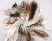 100 Feathers assorted Natural Mix 3 to 6 inches craft feathers k171