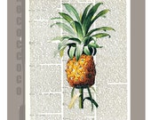 Beautiful Pineapple Illustration Print on Vintage Dictionary Book page -  Kitchen decor, Botanical art, Artwork