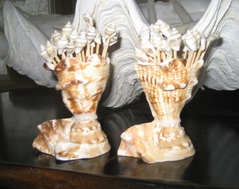 Seashell toothpicks in a Lambis shell holder set of 2