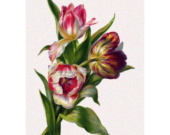 Tulip Flowers Card - Thank You Card - Greeting Card from Vintage Image