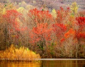 Autumn landscape photography, rustic nature photograph,, red gold brown woodland lake, Fall color