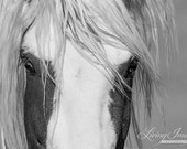 Thor's Eyes - Fine Art Wild Horse Photograph - Wild Horse - Black and White - Thor - Fine Art Print