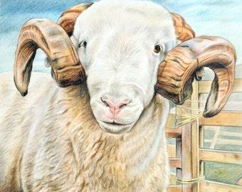 Whitefaced Woodland Ram - sheep greeting card