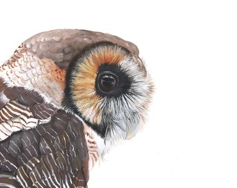 Owl Painting 2014 Print of watercolor painting A4 size wall art print - bird art print - watercolor print - owl decor