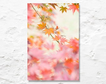 fall color photograph fine art photography pink orange autumn leaves nature photo nursery art wall decor
