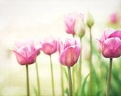 "Spring Photography - tulips pink green flower white nursery wall art floral photo decor shabby chic large photograph, ""To Walk in Beauty"""
