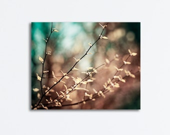 """Brown, Teal Canvas Print - nature gallery wrap beige turquoise aqua dark branch photography branches wrapped large wall print, """"Reverence"""""""