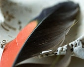 The Flight of Real Image, Tribal, Abstract, Feather, Shell, Dreamy, 8x10