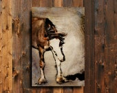 Draft - Draft Horse Art - Clydesdale art - Horse art canvas - Horse canvas - Horse photography - Horse decor - Brown horse  - Animal art