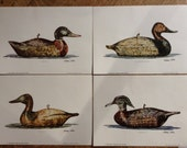 Duck Decoy signed artist proofs William Cotter prints