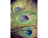 Peacock photograph - metallic bright colorful wall art - home decor - peacock feathers - green purple blue - metallic print