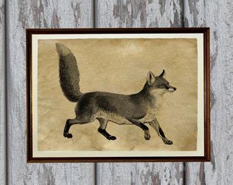 Fox poster Animal art print Forest creature Vintage decor AK99
