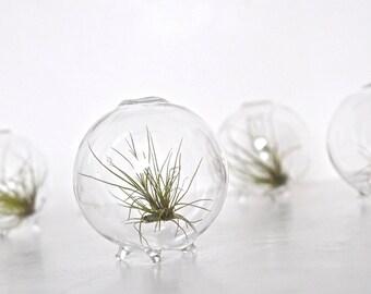 Air Plant in a Bubble / Air Plant Eco Globe, Glass Eco Orb Terrarium, Clear Blown Glass Globe Vase, Air Plant in Glass Ball Vase, Eco Sphere
