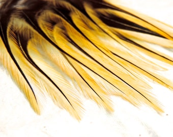 Natural Golden Badger Feathers, Yellow Gold Craft Feathers QTY12
