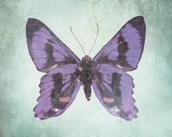 Butterfly Art Print - Purple Aqua Wall Art Home Decor Nursery Girl Room Natural Wings Bug Photography