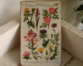 antique botanical-'flowers of the downland' plate,applied to natural wooden tag/dresser/door hanger-gift ideas