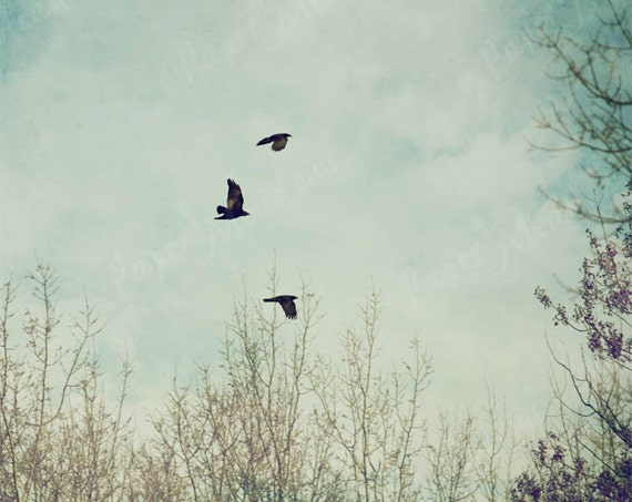 Bird Photography Download, Digital Image, Living Room Art, Birds in Sky, Flying Birds, Crows, 8x10, Sky, Cottage Chic Photo, Printable Photo