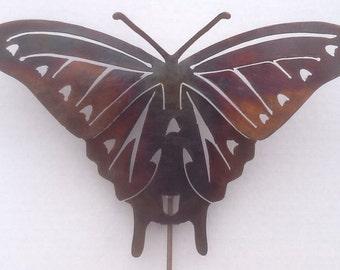 Medium Swallowtail Butterfly Garden Pic