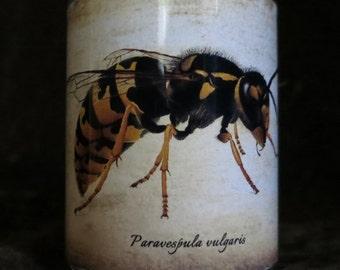 Candle holder/ luminary Paravespula vulgarism , a type of wasp