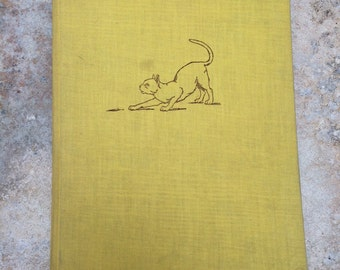 Introducing Cats by Alan C Jenkins