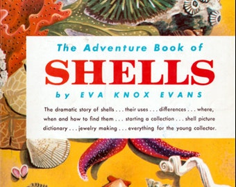 The Adventure Book of Shells by Eva Knox Evans, illustrated by Vana Earle