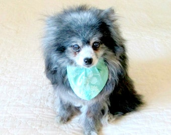 Small Dog Cravat, Small Dog Necktie, Custom Neck Sizes for Small Dog, Light Teal, Companion Piece for Dog Party Dress