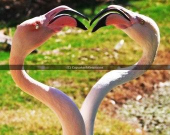 "Pink ""Flamingo Love"" Fine Art Photograph"