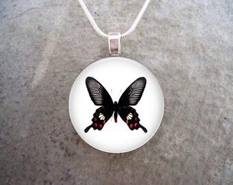 Butterfly Jewelry - Photo Jewelry - Butterfly 18