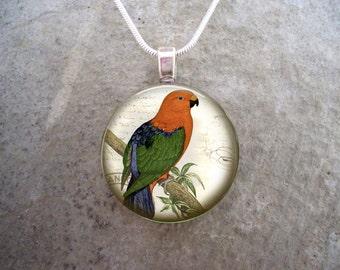 Parrot Jewelry - Glass Pendant Necklace - Victorian Bird  22