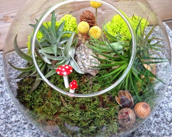 "Large 8"" Modern Sphere Air Plant and Moss Terrarium - A Wonderful Birthday or Mothers day gift"