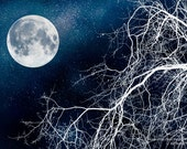 Icy White Tree Branches Reach For The Stars Under A Winter Full Moon - Wall Art - Home Decor -Fine Art Photography Print - Black White Blue