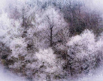 SALE! Clearance!  Winter Tree Landscapes, Ethereal Nature photography, Snowy Trees, Icy Branches, Winter Wonderland, Fine Art PRINT