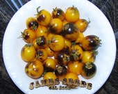 Indigo Sun f2 Blue / Yellow Cherry Tomato Seeds -  2014 favorite!