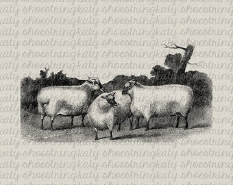 Antique Sheep Farm Animal Image Digital Download Image Transfer to Fabric, Paper Crafts, Collage, Burlap, Pillows,Totes, Tea Towel, Wall Art