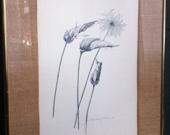 Vintage Original botanical Pencil Drawing by artist Moseley Wilson 1977,  Mountain Avens