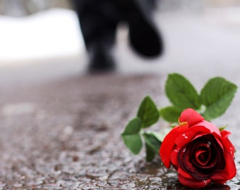 Letting Go - walking away from a single rose on a snowy road - It's For the Better - Fine Art Photography Print