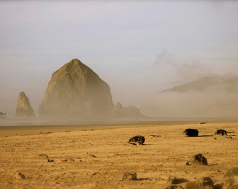 "Fine Art Photo - Title: ""Oregon Series Five"" - billi j miller photography - oregon, haystack rock, yoga, focus, coast, sand"