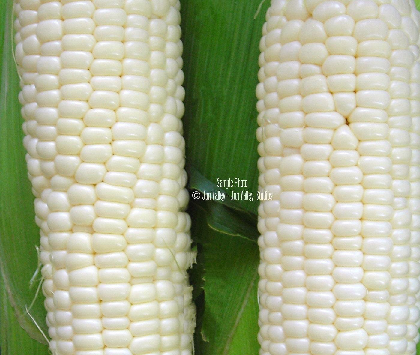 100 Hickory King White Corn Seeds 1800 Heirloom! Beautiful ...