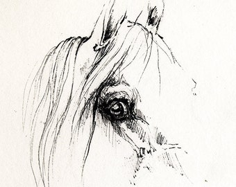 Arabian horse sketch
