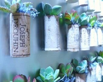 Wine Cork Succulent Magnets, Succulent Corks Party Favors, Wine Cork Succulent Garden, Cork Succulent Magnets, Succulent Magnet, Cork Magnet