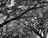 Tree Black and White Photography, Contemporary Art, Large Wall Print, Labyrinth