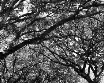 Abstract Nature Photography, Black and White Photo, Labyrinth, Tree Branches, Contemporary Art, Large Wall Print