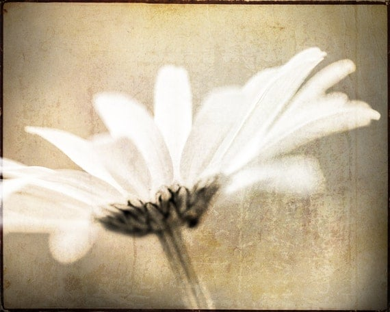 Daisy Macro. White Flower. Nature Photography. Botanical Print by OneFrameStories.