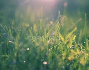 Green Gras Bokeh - Fine Art Photography Print - 8x8 12x12  8x10 8x12 inch Photograph light nature raindrops sparkle