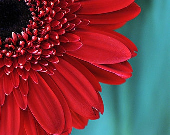 Flower Photograph, Red Gerbera Daisy Picture, Aqua Teal Red Fine Art Floral Photography, Nature Vertical Wall Art, Gerber Daisy Photo Print