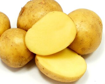 German Butterball Seed Potatoes Certified Organic and Virus Free 2 Lbs. Yellow Potatoes - Spring Shipping Non-GMO
