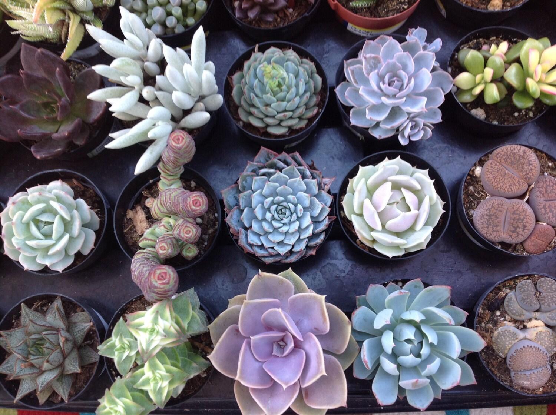 cette liste est pour une vari t de petites plantes grasses. Black Bedroom Furniture Sets. Home Design Ideas