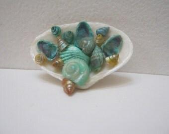 Sea Shell Brooch Pin Mint Green Seashell Jewelry Shell Pin Beach Jewelry Woman Teen Gift Idea