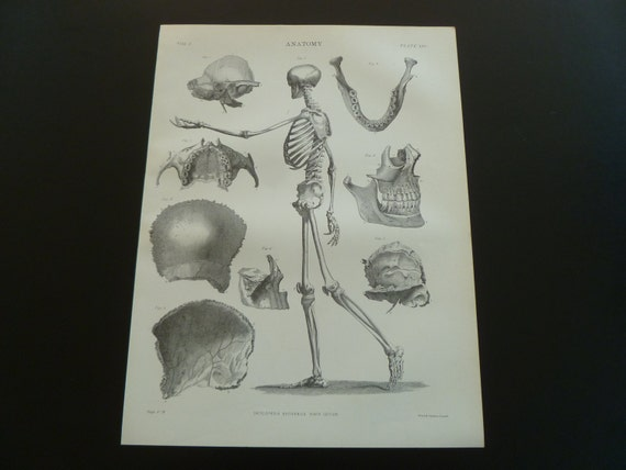 139 year old antique anatomy print 1875 by decorativeprints - Tuinman fiber ...